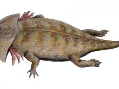 头部似马桶盖的2.1亿年前怪异两栖动物