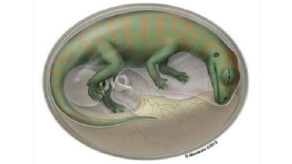 研究团队从化石胚胎中发现了超过200块骨骼碎片,深入的了解了恐龙的发育过程。