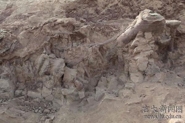 新疆吐鲁番鄯善县发现我国最大的侏罗纪恐龙化石