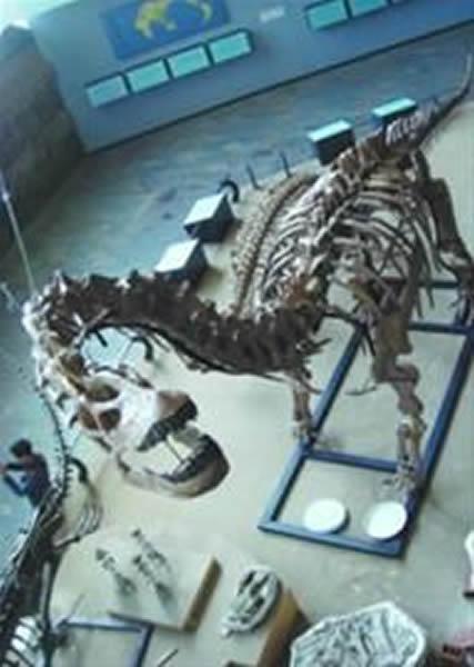 """目前辽宁发现的最大恐龙""""辽宁巨龙"""""""