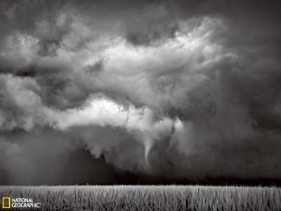 美国明尼苏达州玉米田上空的漏斗云