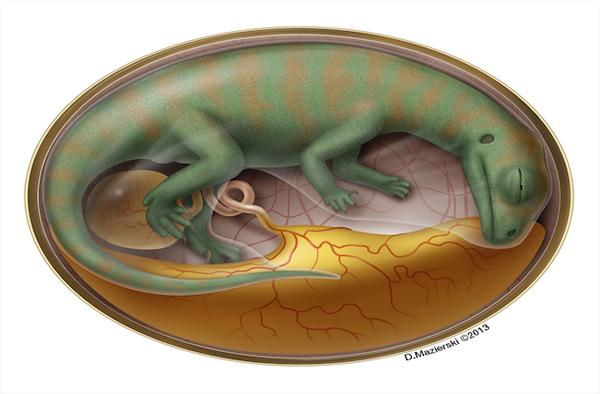 世界最古老恐龙胚胎复原图
