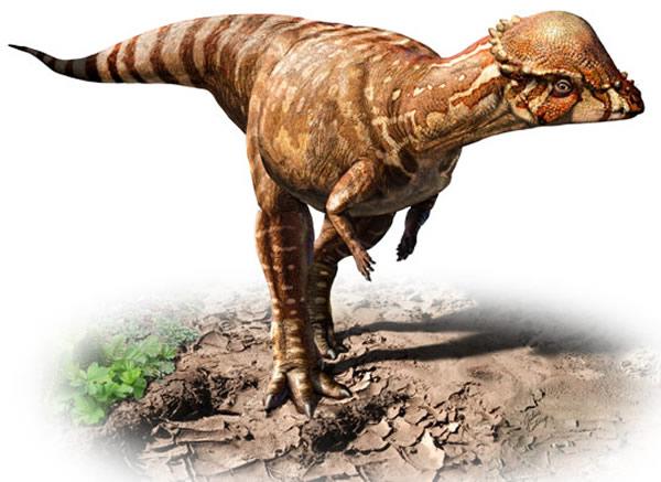 恐龙新物种Acrotholus audeti的复原图