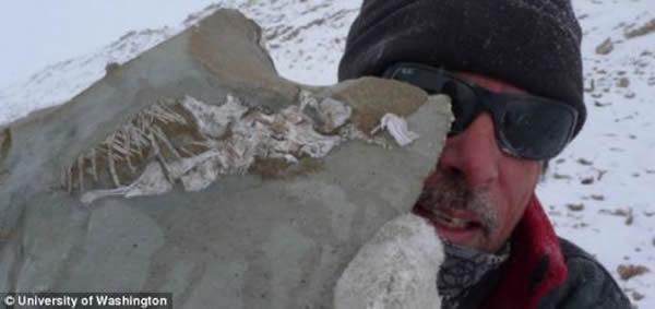 在一次南极洲探险活动中,Iziko南非博物馆的罗杰·史密斯手里拿着一块原蜥(学名:Prolacerta)的化石。