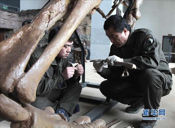 """""""辽宁巨龙""""正式亮相辽宁朝阳鸟化石国家地质公园博物馆"""