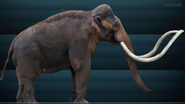 复活猛犸象引发科学家对于伦理道德问题的争论
