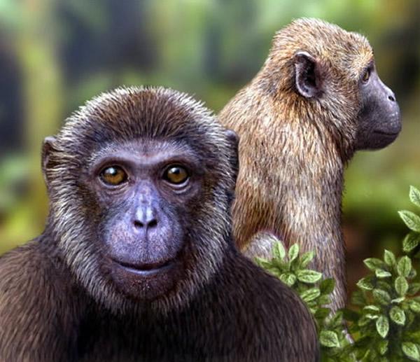 新出土化石证明,2500万年前Rukwapithecus猿(左)和Nsungwepithecus猴在非洲己经住在一起。