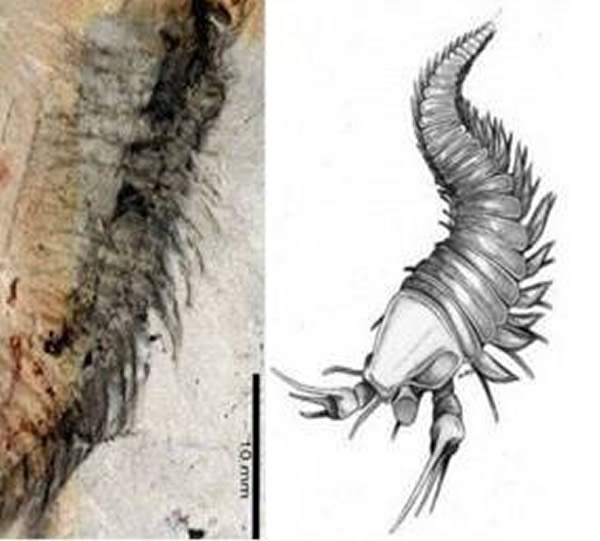 """发现酷似""""剪刀手""""的古生物化石"""