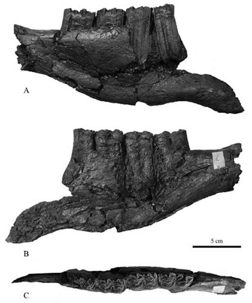 云南禄丰石灰坝地点的三趾马化石研究新进展