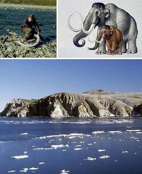 猛犸象的最后栖息地:弗兰格尔岛