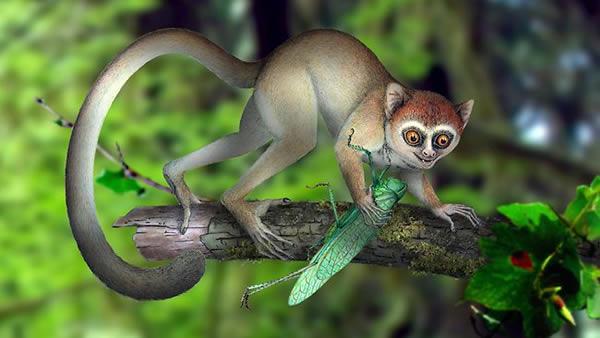 阿喀琉斯基猴(Archicebus achilles)复原图