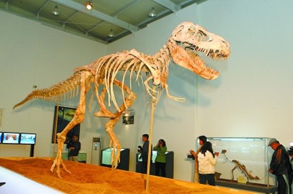 """走私到美国的""""勇士暴龙""""化石回到蒙古并首次与观众见面"""