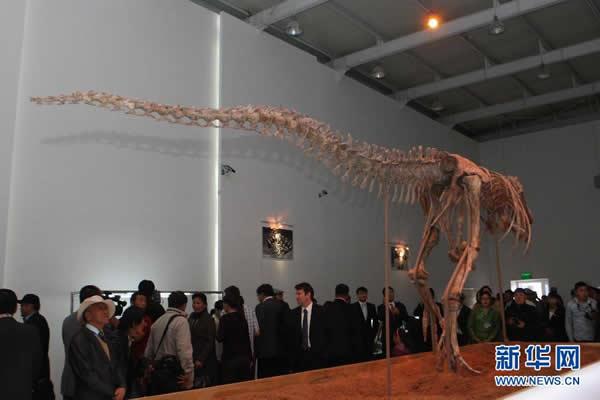 蒙古国展出被归还的勇士特暴龙化石