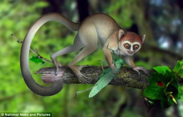 阿喀琉斯基猴的复原图,一度生活在中国中部的森林地区
