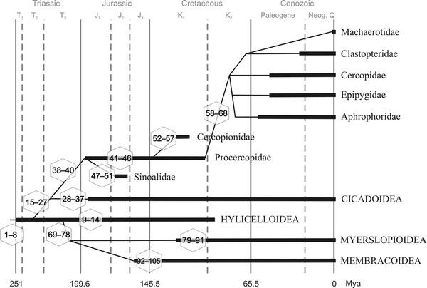 沫蝉演化图