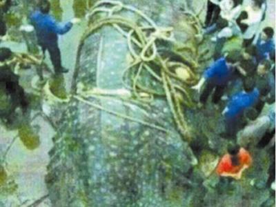 网传在新疆喀纳斯湖三道湾打捞出一只湖怪