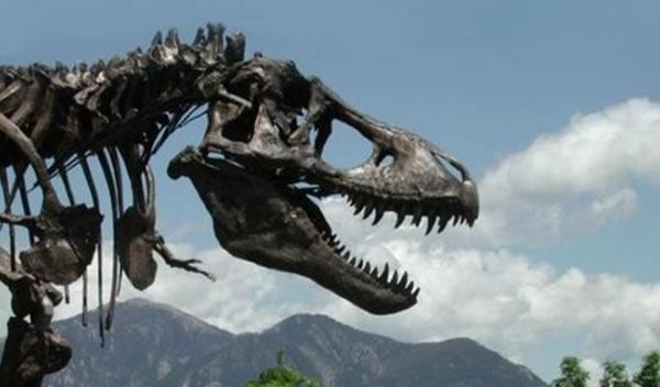 霸王龙被认为那个时代最具攻击性的恐龙之一,强有力的上下颚可撕裂其他生物的肉体