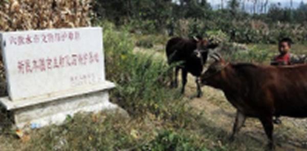 盘县羊圈三叠纪海生爬行动物群遗址