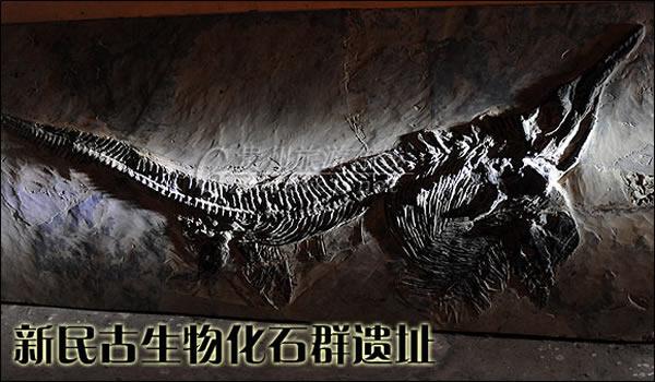 新民古生物化石群遗址