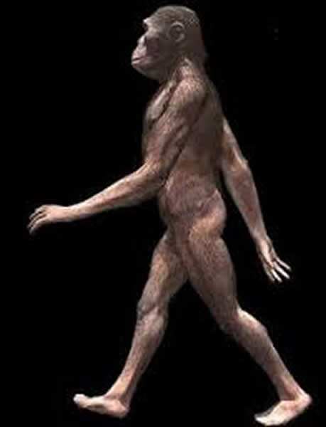 早期人类的毛发脱落是为了加快奔跑速度