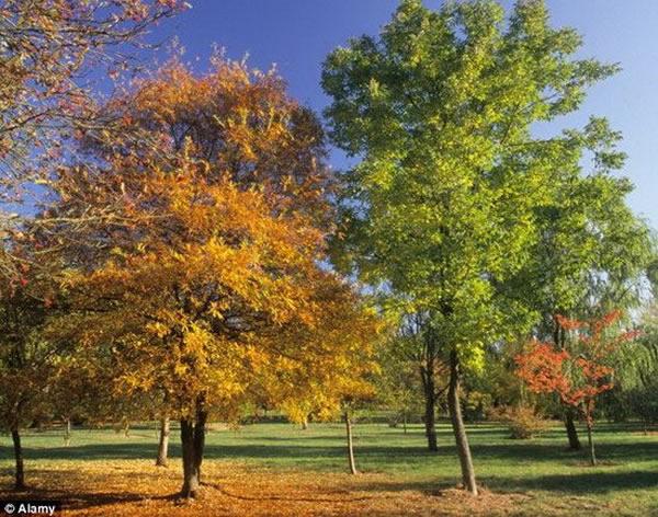 神秘疾病:英国境内数千棵橡树遭受感染,导致四年之内大量死亡