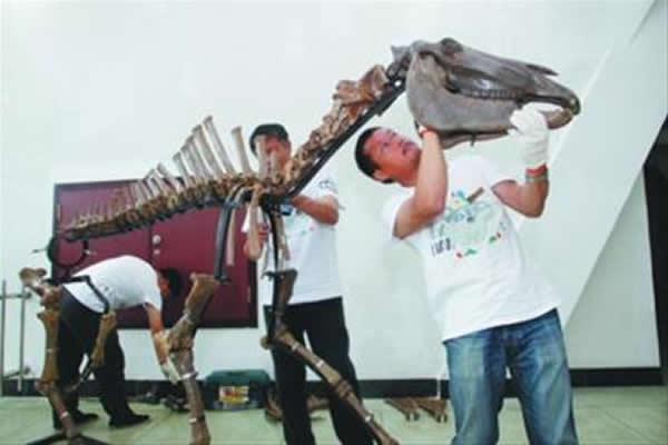 大连自然博物馆复原组装1.7万年前的大连马骨架化石