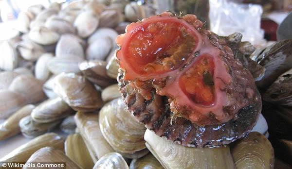 在智利和秘鲁的海边生活着一种怪异的剧毒海洋生物