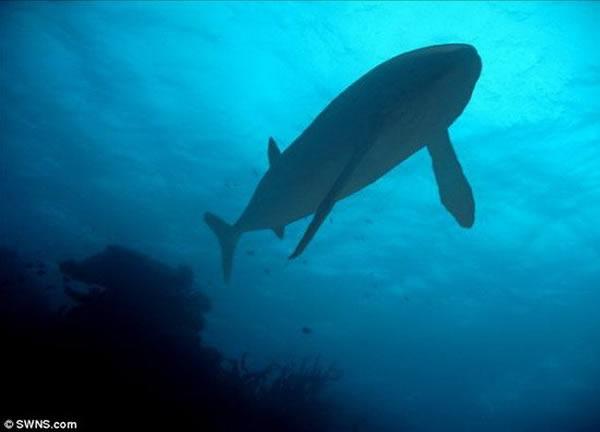 科学家最新发现侏罗纪时期大型鱼类骨骼化石,证实它是利兹鱼,其体长可达到15.85米,生活在1.6亿年前