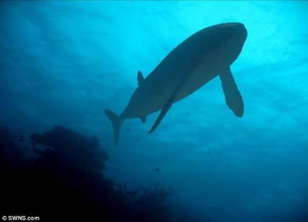 艺术概念图,展示了生活在1.6亿年前的巨型鱼类Leedsichthys。科学家表示这种鱼类以浮游生物为食,身长可达到52英尺(约合16米),超过奥运会游泳池,灭