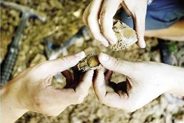 探访到花山一处,发掘到疑似化石。