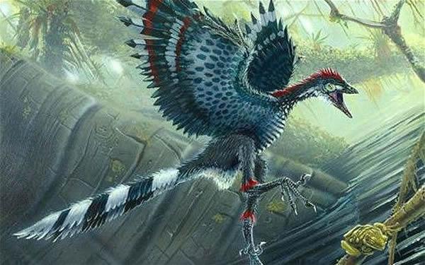 科学家认为恐龙的大脑类似于始祖鸟的大脑,后者被认为是第一个鸟类。