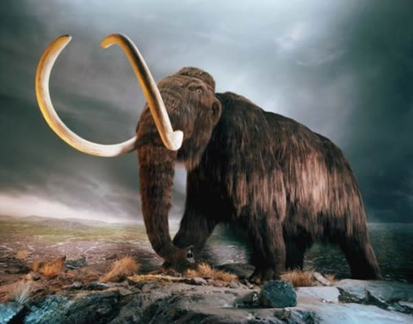 科学家认为,大寒冷期和猛犸象等大型哺乳动物以及北美洲克洛维斯人的灭绝有关。