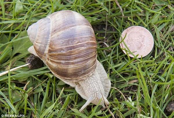 美国威斯康辛-麦迪逊大学动物学家约翰-奥罗克发现当蜗牛接近植物时,植物会发出预警,告诉其它植物危险的到来,同时释放的化学物质使蜗牛失去食欲