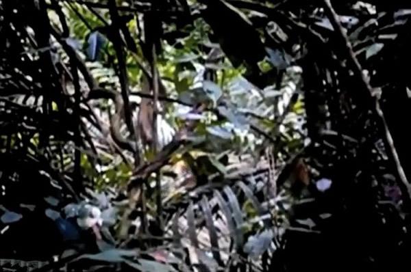 丛林中/巴西亚马逊丛林中的土著印第安人部落