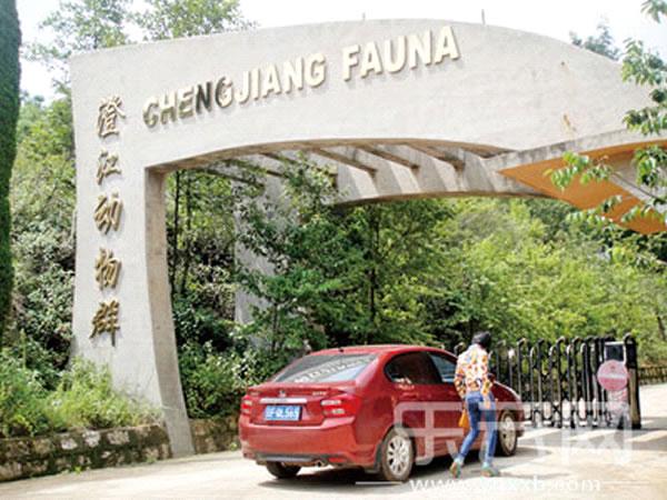 游客参观动物群化石馆,但只能徒步进入。
