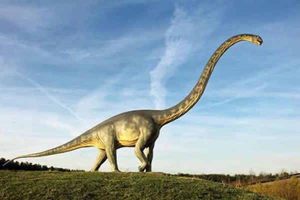 新研究表明长颈恐龙的脖子没有想象中灵活