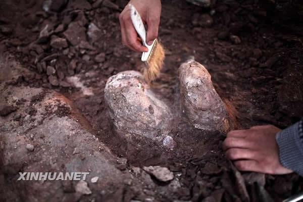 山东省莱阳市再次出土大量恐龙化石