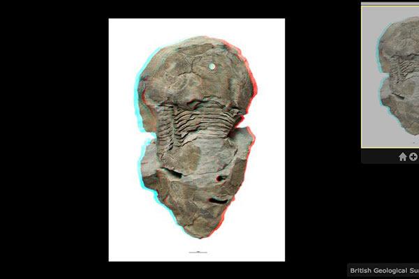 英国地质调查局推出支持打印3D化石图像的化石数据库