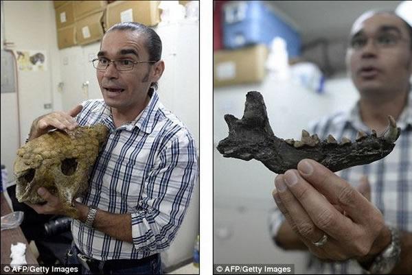 考古研究有助于石油公司勘测油田,林康指出,他和研究小组希望通过考古研究工作让人们更多地了解远古时期古人类如何与史前巨兽共同生活