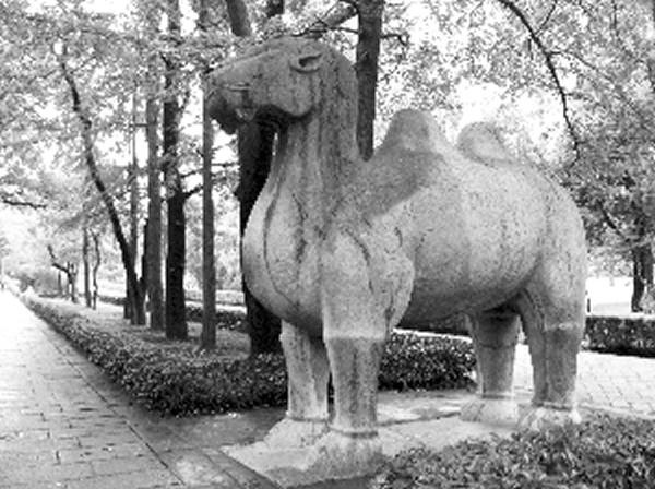 明孝陵骆驼石像上的菊石和有孔虫化石