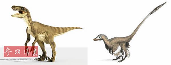 《侏罗纪公园》中的伶盗龙(左),而真实的伶盗龙可能更像长着牙齿的火鸡(右)。