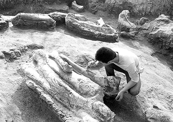 莱阳白垩纪恐龙化石挖掘现场探访记