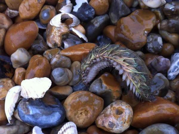 英国海滩惊现罕见七彩深海海鼠