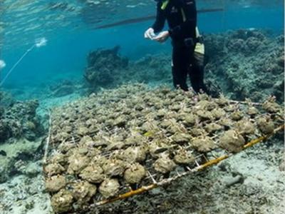 南太平洋海底发现杀手海藻 有毒触手一碰就让珊瑚脱皮