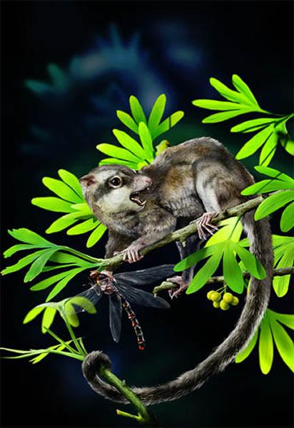 探索哺乳动物起源