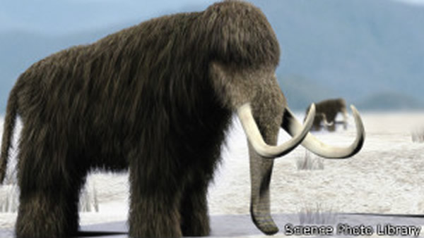 猛犸象绝种主因是气候变化而不是人类猎杀