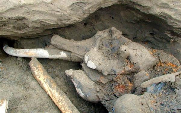 """俄罗斯男孩闻臭味发现3万年前长毛象遗体,1公尺长""""象鞭""""完好无缺"""
