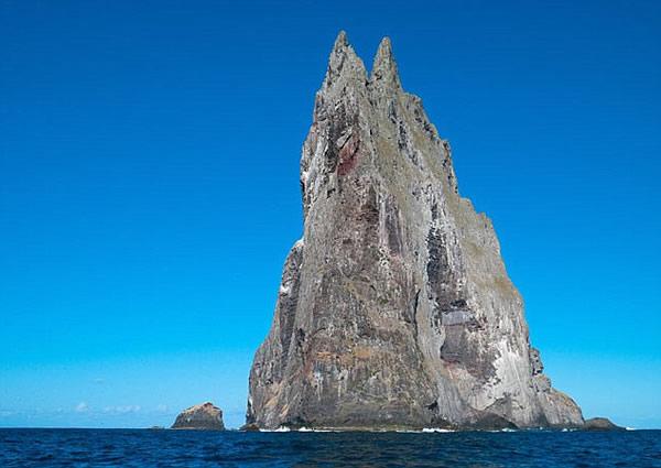 太平洋柏尔金字塔岛发现灭绝80年的树龙虾