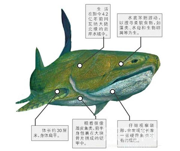 """云南志留纪地层中发现的古鱼:""""初始全颌鱼"""""""