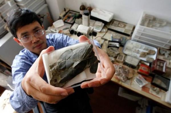 古生物学家在中国一个水库底部发现最古老鱼类化石